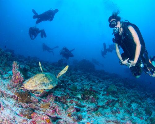 Maldivas Vida a bordo de buceo